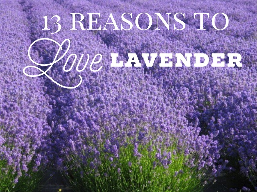 13 Reasons To Love Lavender Essential Oil